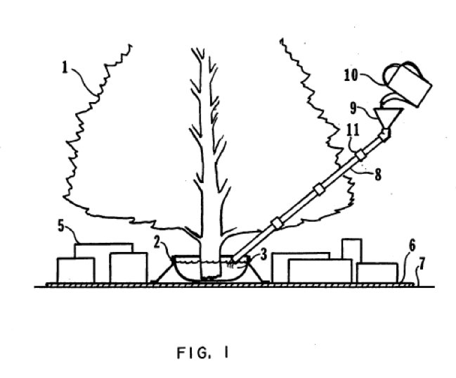 How Often To Water Christmas Tree.A Patent View Decreasing Fire Risk From A Christmas Tree